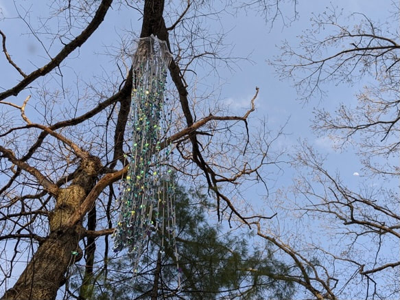 Covered in sequins Ninety strands of grey ribbon Hanging from a tree